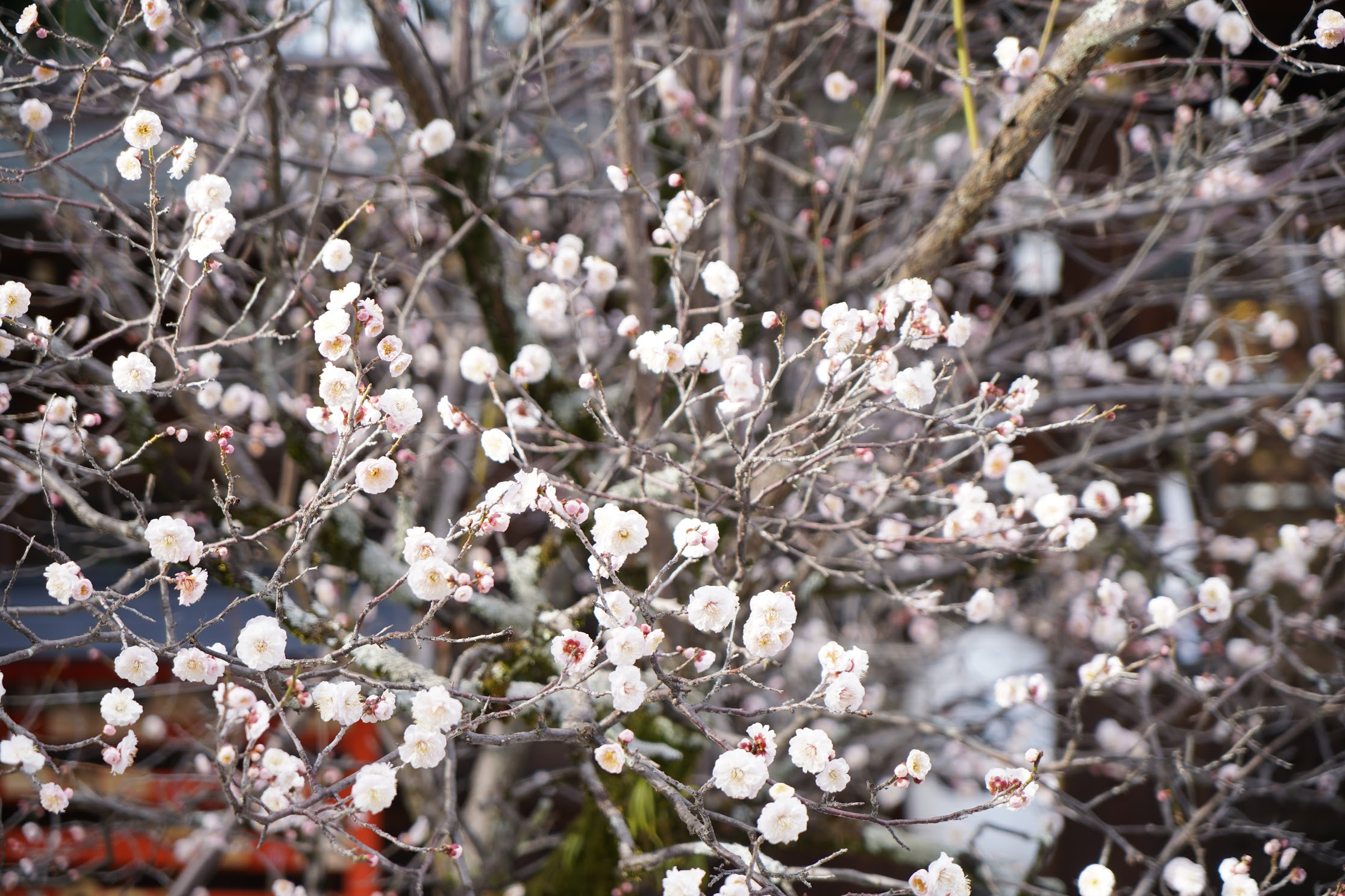 しっかり春